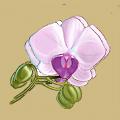 http://s5.uplds.ru/WRnl6.png